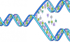 Graphic: DNA Splitting