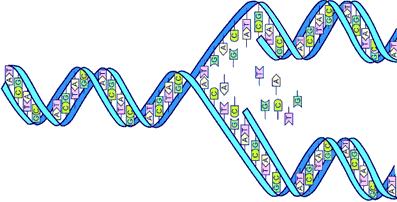 Graphic: DNA Splitting