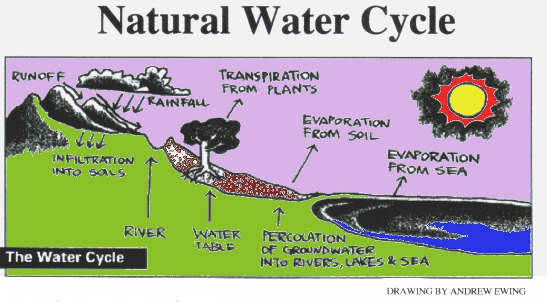 Water cycle drawing, WikiCommons